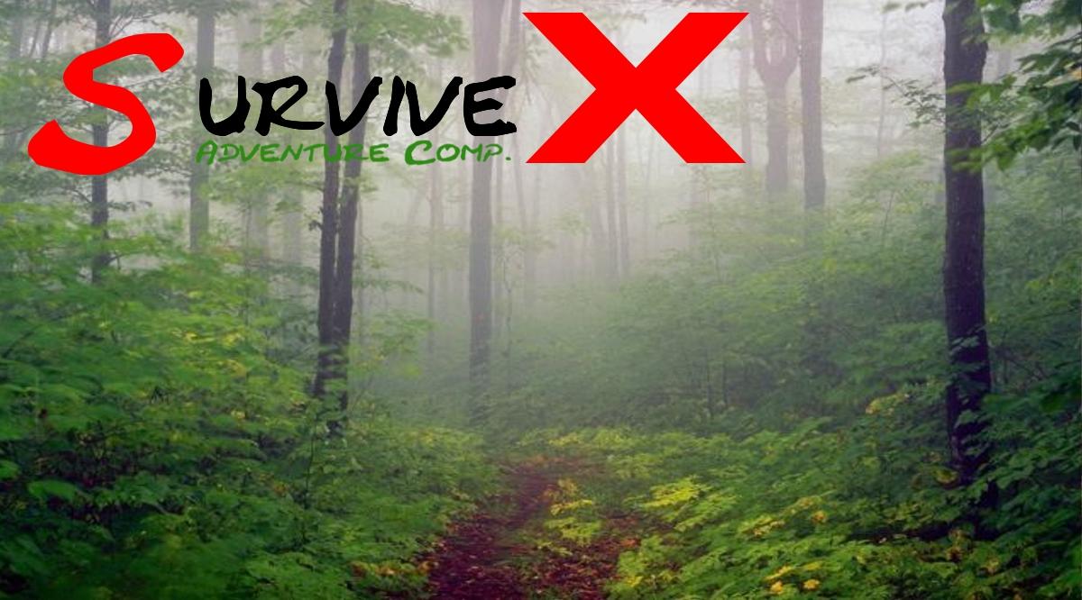 Sie suchen besondere Erlebnisse für Ihren Urlaub im bayerischen Wald?
